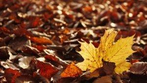 Tart az őszi nagytakarítás