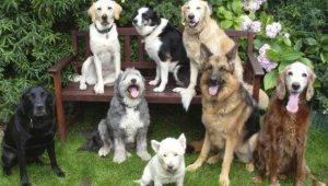 Kutyáik regisztrációjára kérik az állattartókat