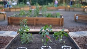 Közösségi kert épült Kelenföldön
