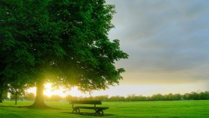 Önkéntes munkában újult meg egy Etele úti park